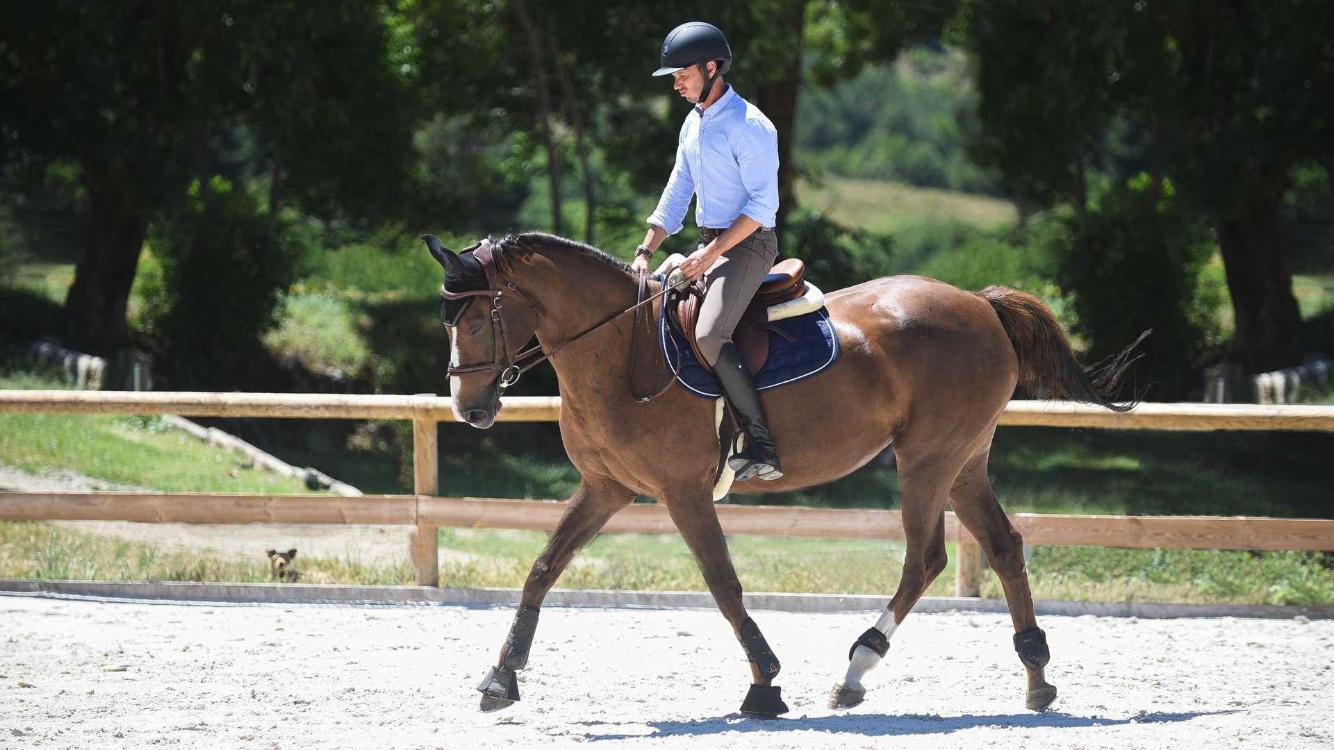 Biomécanique appliquée à l'équitation